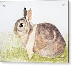 Pastel Pet Rabbit Acrylic Print