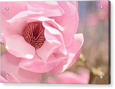 Pastel Pink Petals And Paint Acrylic Print by Lisa Knechtel