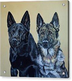 Pastel Portrait Of Two German Shepherds Acrylic Print by Ann Marie Chaffin