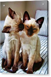 Pastel Sketch Of Siamese Love Acrylic Print