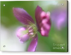 Acrylic Print featuring the photograph Pastel Symphony by Mary Lou Chmura