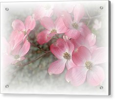 Pastels In Pink Acrylic Print