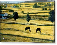 Pastoral Gold Acrylic Print