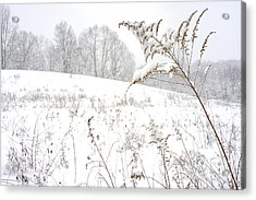 Pasture Field In Winter Acrylic Print