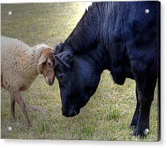 Pasture Pals Acrylic Print by Charlotte Schafer