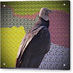 Patchwork Buzzard Acrylic Print