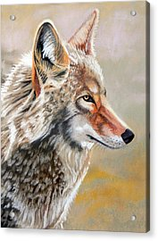 Patchwork Coyote Acrylic Print by Tanya Provines