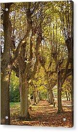 Path 4- Ostromecko Gardens Acrylic Print