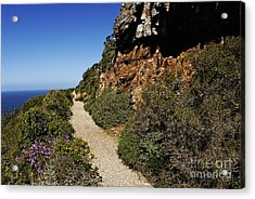 Path At Cape Of Good Hope Acrylic Print by Sami Sarkis