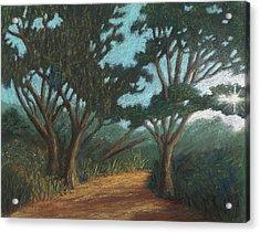 Path By Lake Murray 01 Acrylic Print