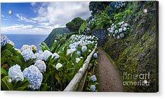 Path Hydrangea Acrylic Print by N R