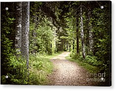 Path In Green Forest Acrylic Print by Elena Elisseeva