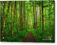 Path In Green Acrylic Print by Sonya Lang