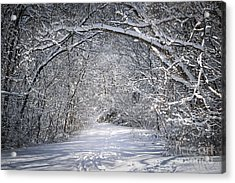Path In Snowy Winter Forests Acrylic Print by Elena Elisseeva