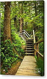 Path In Temperate Rainforest Acrylic Print