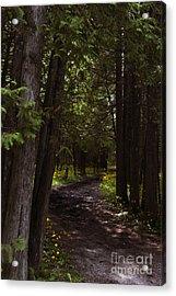 Path In The Dark Woods Acrylic Print by Margie Hurwich