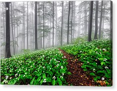 Path In The Mist Acrylic Print by Evgeni Dinev