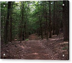 Path In The Woods Acrylic Print by Catherine Gagne