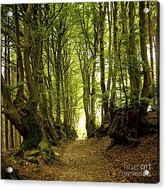 Path Lined Whit Old Beeches. Allier. Auvergne. France Acrylic Print by Bernard Jaubert