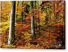 Acrylic Print featuring the photograph Path Of Autumn 1 by Charles Lupica