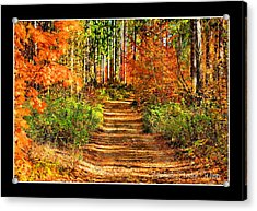 Acrylic Print featuring the photograph Path Of Life by Michaela Preston