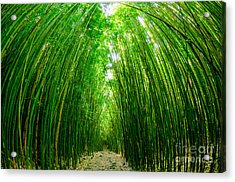Path Through A Bamboo Forrest On Maui Hawaii Usa Acrylic Print