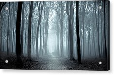 Path Through A Misty Forest During A Foggy Winter Day Acrylic Print by Sjo