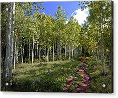 Path Through The Aspens In Colorado Acrylic Print by Karen Stephenson