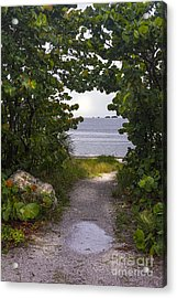 Path Through The Sea Grapes Acrylic Print by Marvin Spates
