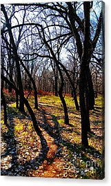 Path Thru The Oaks Acrylic Print by David Taylor