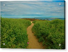 Acrylic Print featuring the photograph Path To Blue by Brenda Jacobs