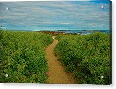 Path To Blue Acrylic Print