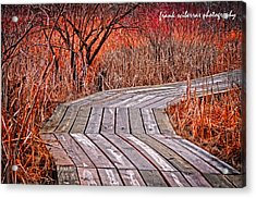 Path To Nature Acrylic Print by Frank Sciberras