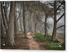 Pathway Acrylic Print by Alice Cahill