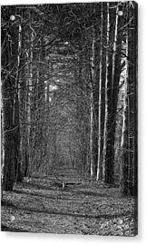 Pathway Acrylic Print