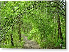 Pathway Through Nature's Bower Acrylic Print