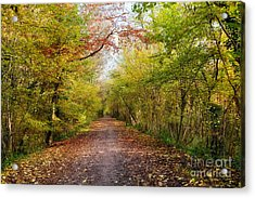 Pathway Through Sunlit Autumn Woodland Trees Acrylic Print by Natalie Kinnear