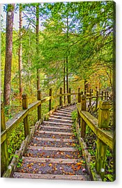 Pathway To The Falls  Acrylic Print by SCB Captures