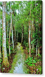 Pathway To The Rainforest Acrylic Print by Kicking Bear  Productions