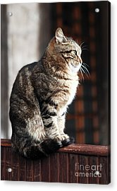 Patience At The Mosque Acrylic Print by John Rizzuto