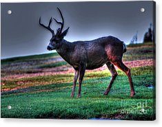 Acrylic Print featuring the photograph Patience by Kevin Ashley