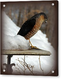 Patience Acrylic Print by Mim White
