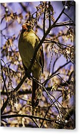 Patiently Waiting Acrylic Print by Barry Jones