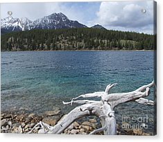 Patricia Lake - Jasper Acrylic Print by Phil Banks