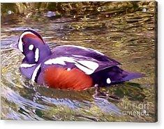 Acrylic Print featuring the photograph Patriot Duck by Susan Garren