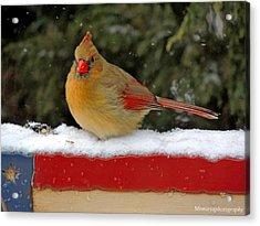 Patriotic Cardinal Acrylic Print by Mary Williamson