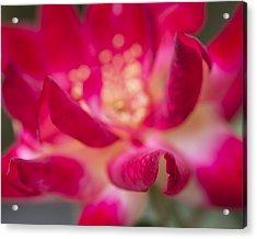 Patterned Petals Acrylic Print by Priya Ghose