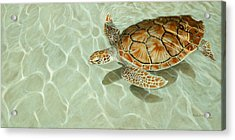 Patterns In Motion - Portrait Of A Sea Turtle Acrylic Print by Rob Dreyer
