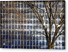 Patterns Of Winter Acrylic Print by Joanna Madloch