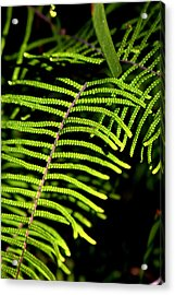 Acrylic Print featuring the photograph Pauched Coral Fern by Miroslava Jurcik